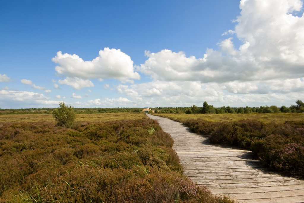 The Corlea Trackway offers a scenic walk