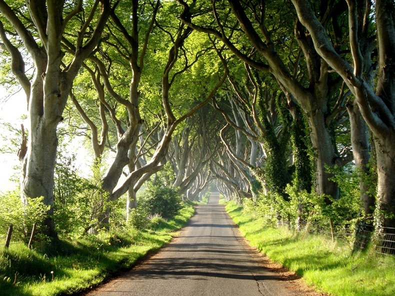 The Dark Hedges were a filming location in Game of Thrones