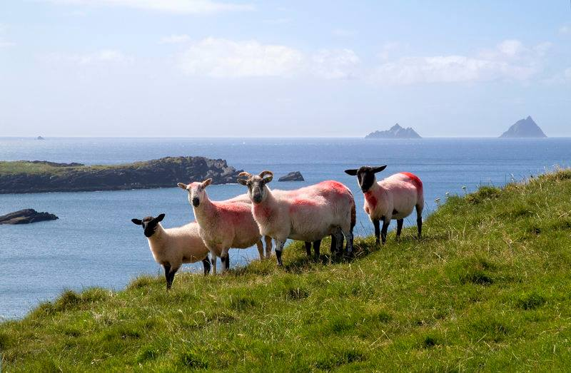 skelligs from valentia island co kerry
