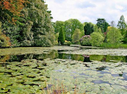 14382_carlow_pond_in_altamont_gardens