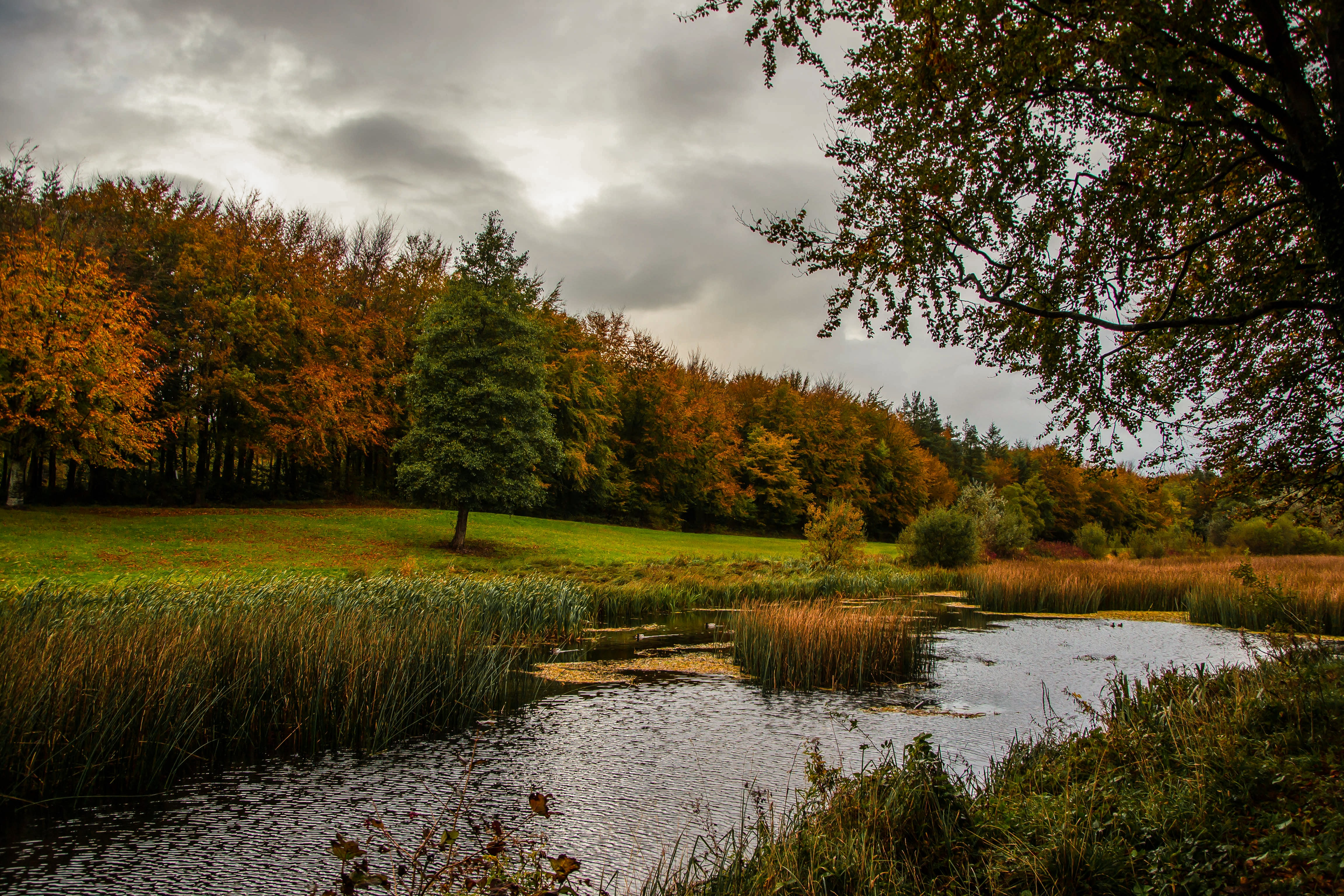 Autumn_evening_Curragh_Chase_forest_park