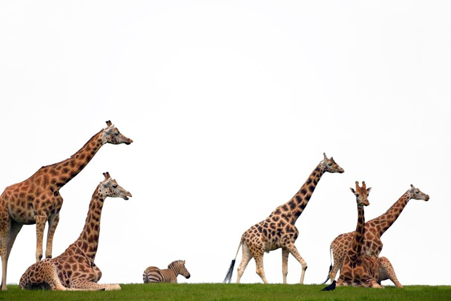 Fota Wildlife Park is a must if you have if you have 48 hours in Cork