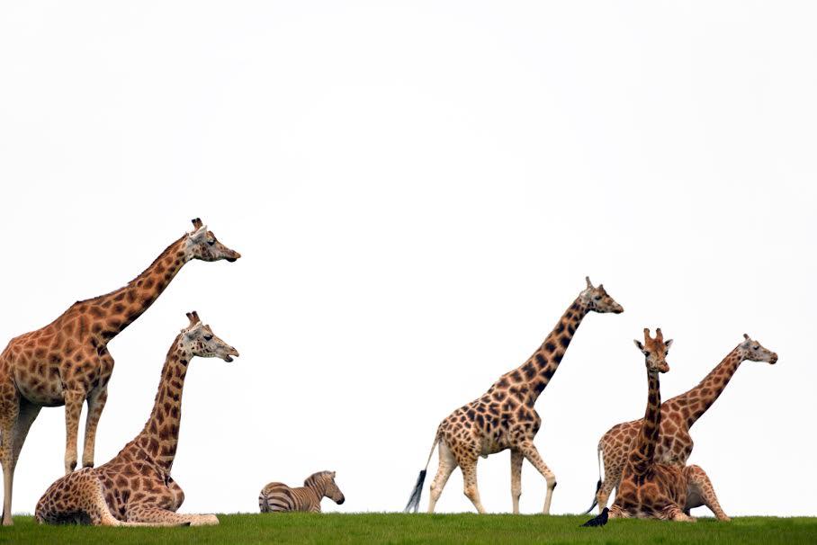 Fota Wildlife Park in County Cork is fun for animal lovers