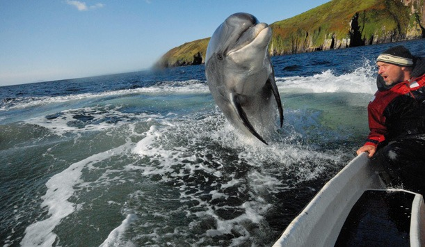 Dingle is one of the top 5 natural wildlife hotspots you must visit in Ireland