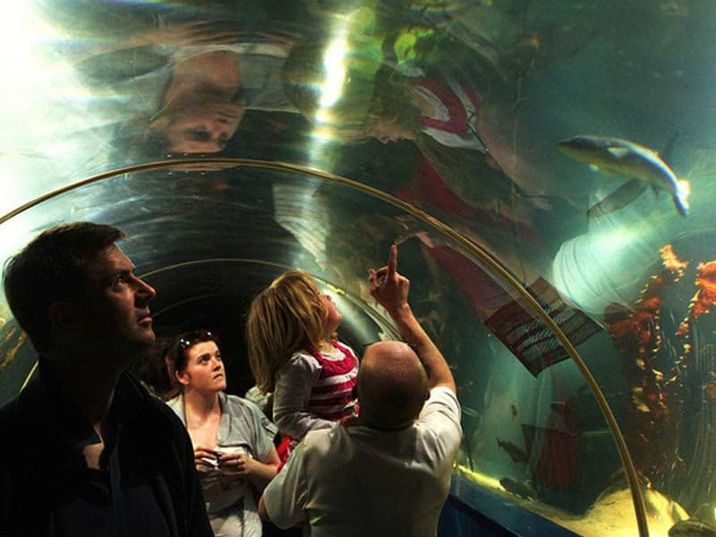 Pay a visit to the Dingle Aquarium to try one of the best things to do in Dingle.