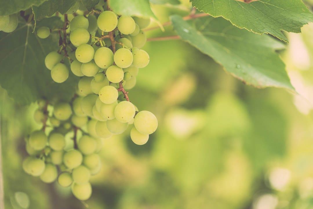 Dennison-Irish-Wines
