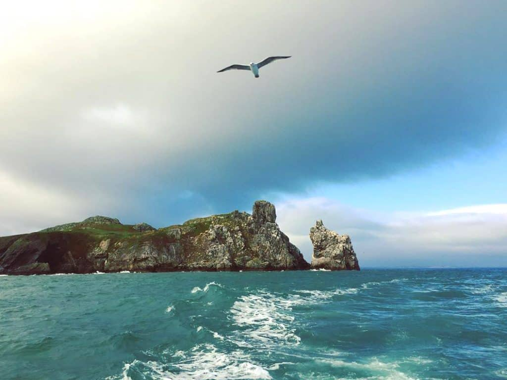 Ireland's Eye is a short ferry ride from Dublin