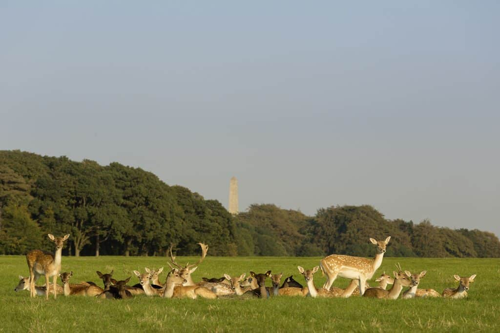 Phoenix Park is one of the top 10 things to do in Dublin for families