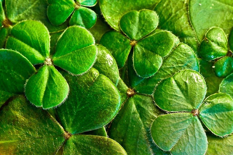 Ní bhíonn an rath ach mar a mbíonn an smacht is a great saying for motivation.