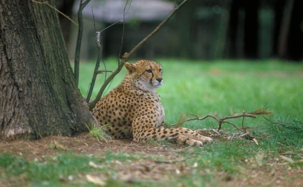 Fota Wildlife Park is a must visit.