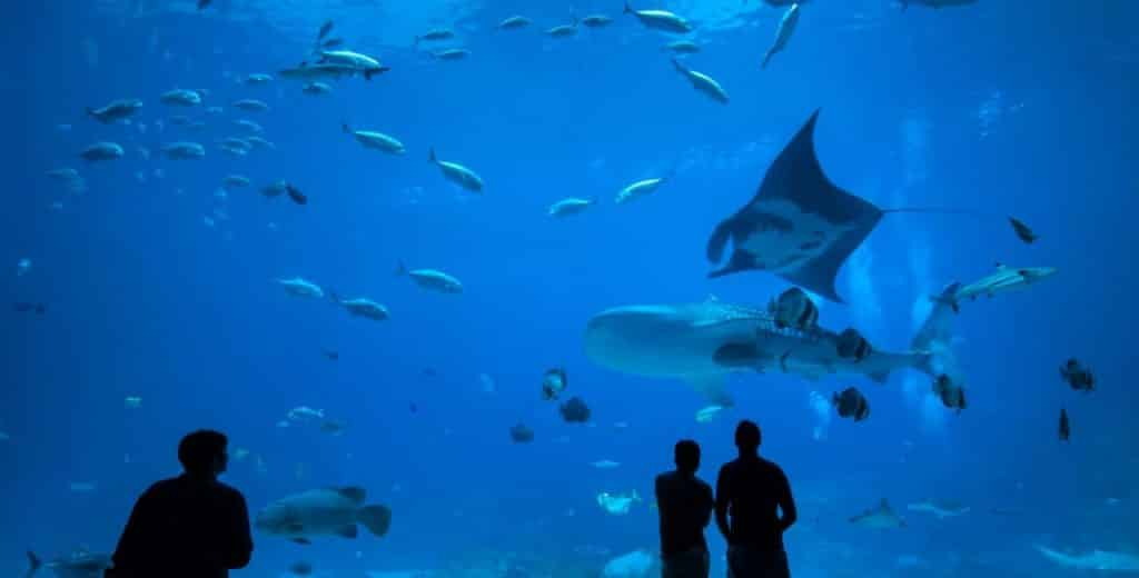 One of the best things to do on Achill Island is the Achill Aquarium. It's definitely one of the top places to see.