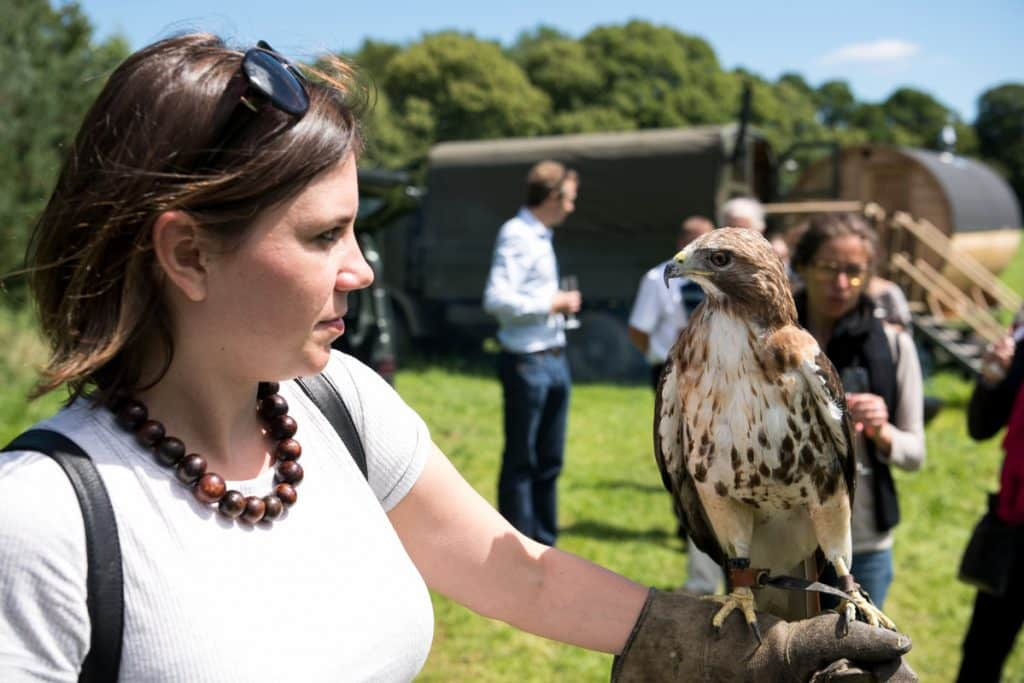 Falconry shows in Ireland offer guests a unique chance to experience falcons up close