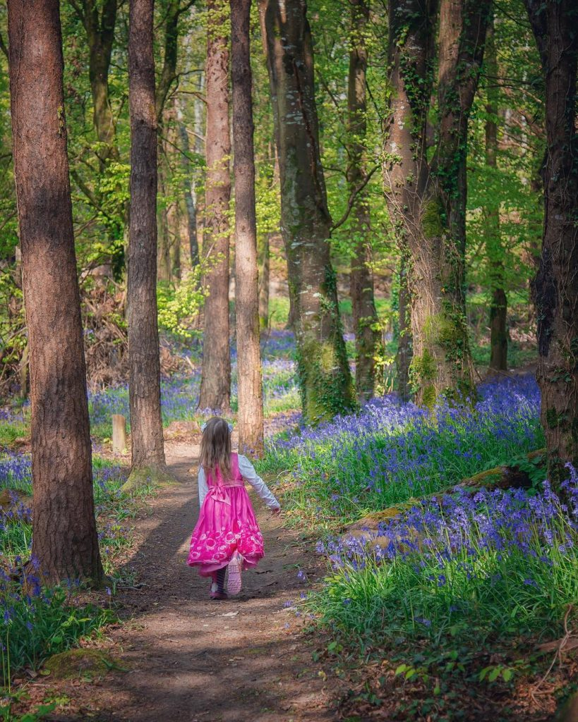 Knockbarron Wood Eco Walk is best during bluebell season in May