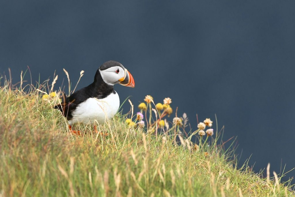 Rathlin Island is home to puffins and other seabirds