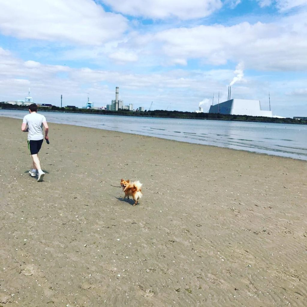 Sandymount Strand is one of 10 incredible places to walk your dog in Dublin
