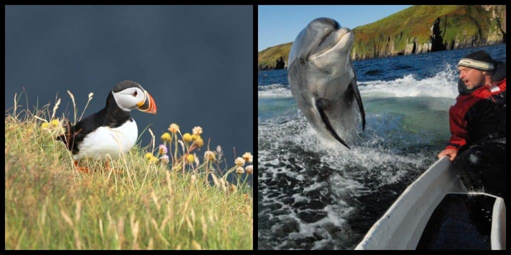 Here are the top 5 natural wildlife hotspots you must visit in Ireland