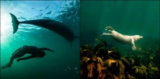 10 best spots for scuba diving in Ireland