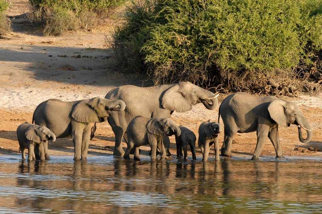 Botswana is one destination Irish people can travel to without a visa