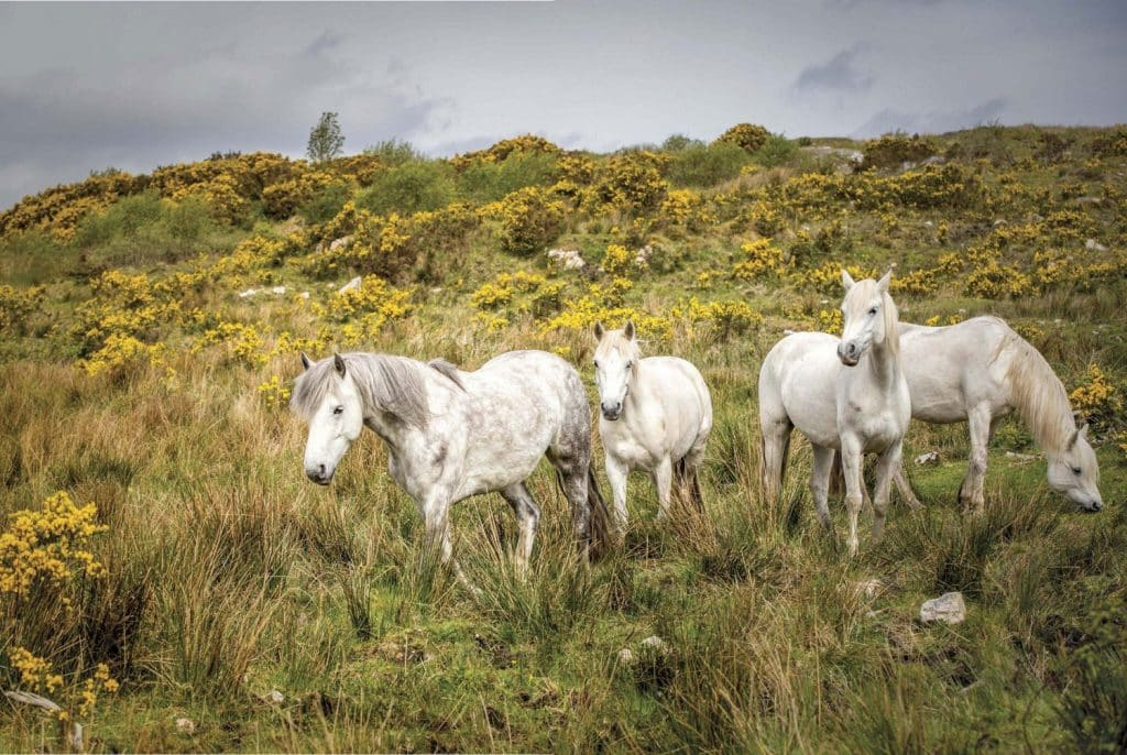 A Galway and Mayo road trip itinerary should include Connemara
