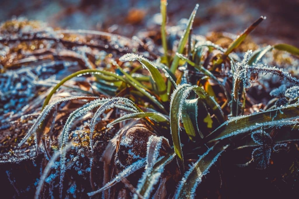 The Irish weather forecast predicts a risk of grass frost