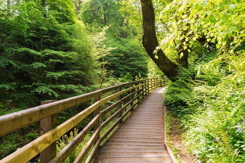 "The forest park is one of 5 reasons why Glenariff is the ""Queen of the Glens"""