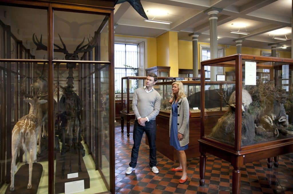 The National Museum of Ireland includes a Natural History branch