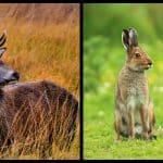 10 amazing animal species native to Ireland