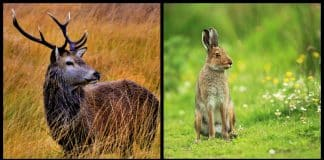10 amazing animal species native to Ireland