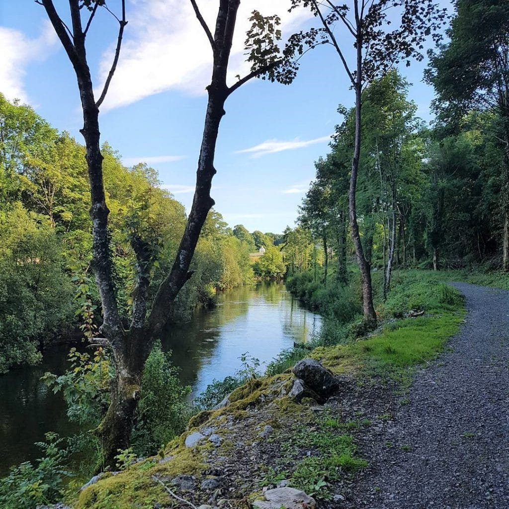 Newcastle Wood is one of the top 10 things to do and see in County Longford