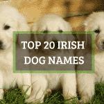 Top 20 Irish dog names, both male and female