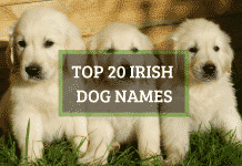 Top 20 Irish dog names, both male and female