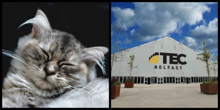 Northern Ireland's biggest pet expo is happening in Belfast this weekend