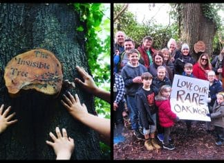 Tree in County Down crowned Northern Ireland's tree of the year