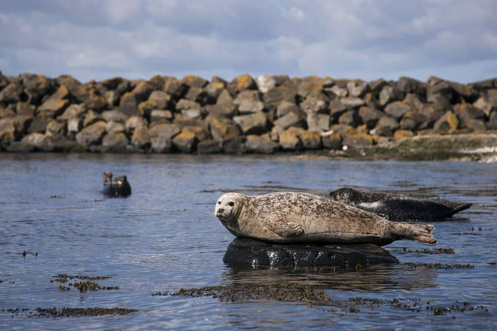 Exciting reasons to visit Rathlin Island include the wildlife