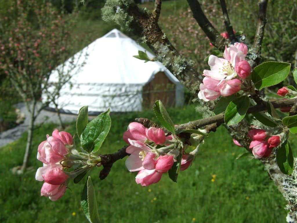 Pink Apple Orchard is one of the 10 best camping sites in Ireland according to reviews