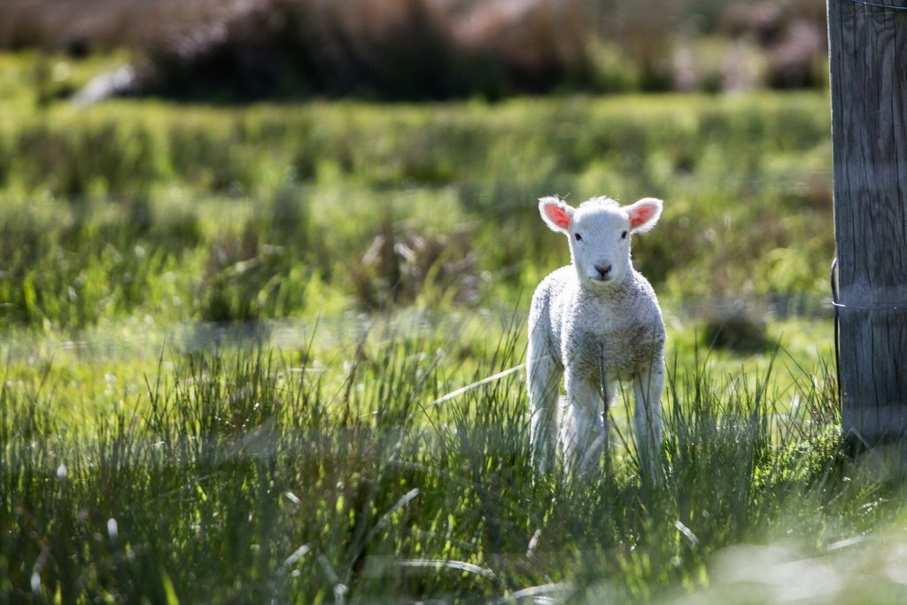 "Hands-down one of the funniest slang words from all counties of Ireland is ""lamb a the lord jaysus"", a common phrase in Wicklow."