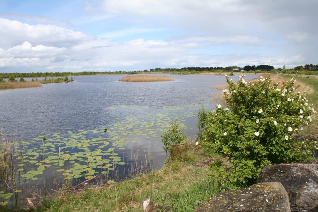 If you have 48 hours in County Offaly, check out Lough Boora