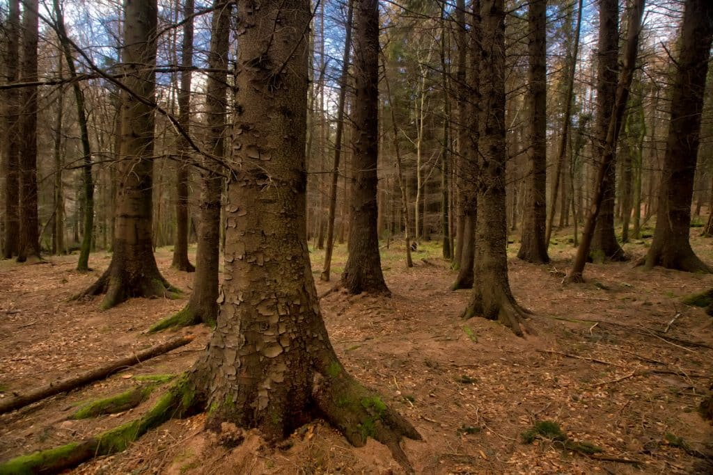 National Trust Northern Ireland plans to plant more than 125,000 trees by 2030