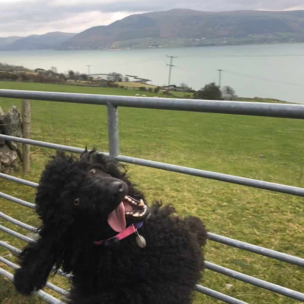Instagram snaps of cute dogs in scenic places around Ireland include this one of Darla at Carlingford Lough