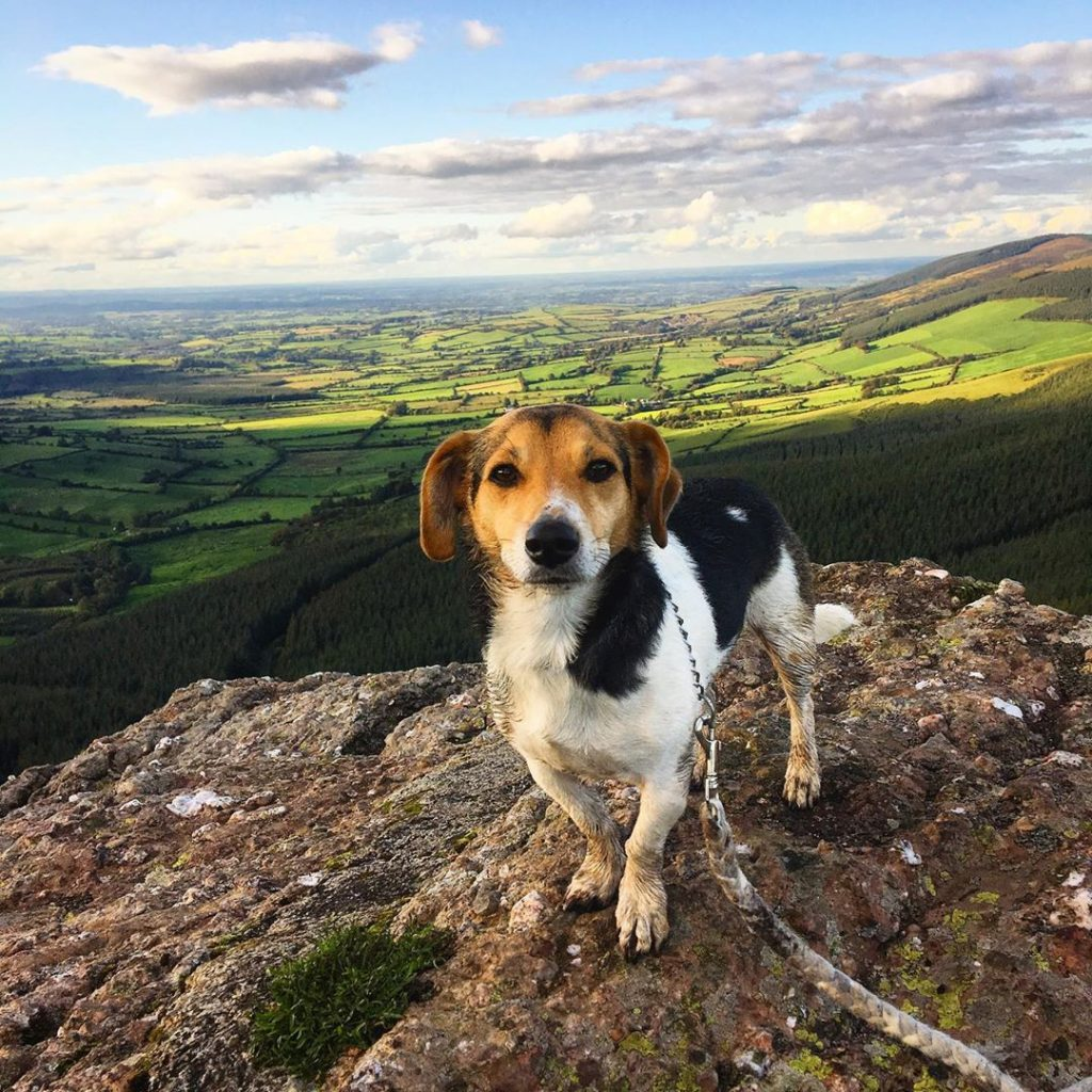 Instagram snaps of cute dogs in scenic places around Ireland include this one of Toby at the Devil's Bit