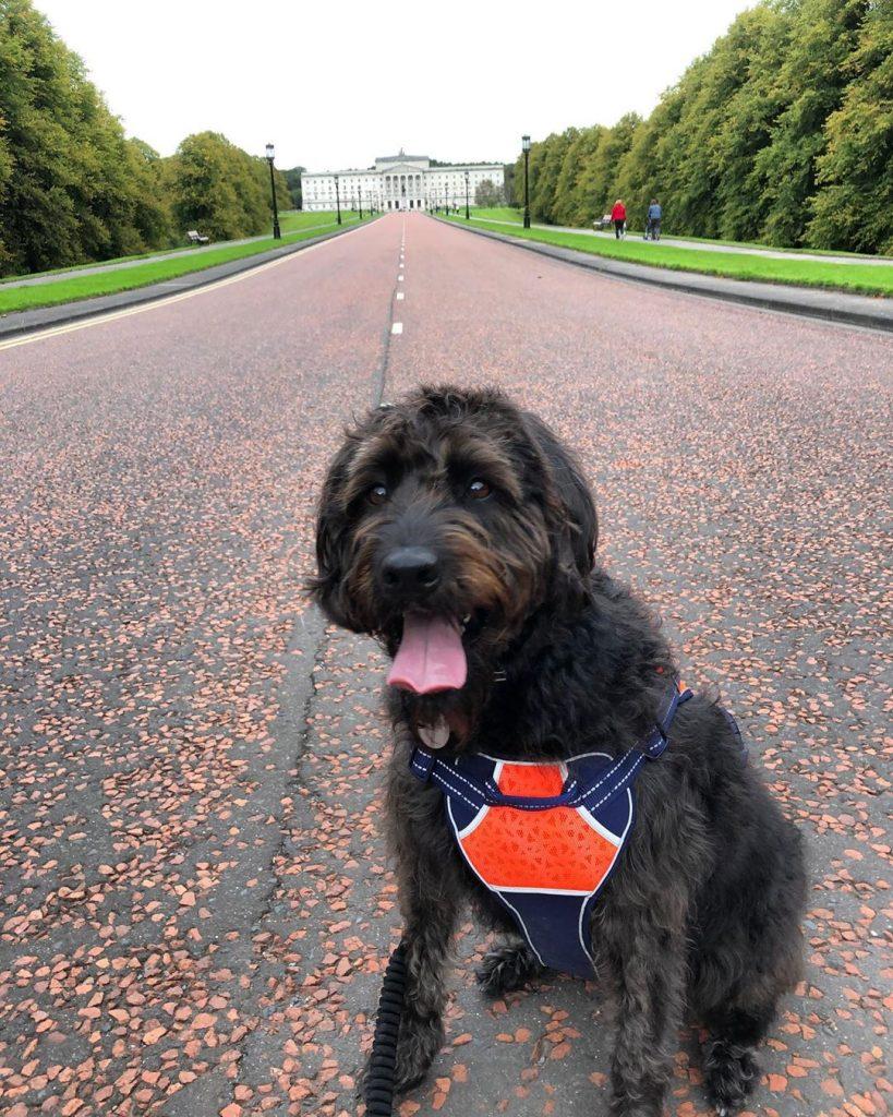 Ebony is enjoying a visit to Stormont Estate