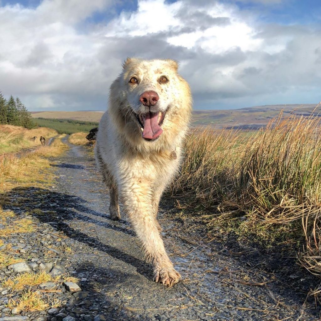 Instagram snaps of cute dogs in scenic places around Ireland include this one of Jess at the Burren