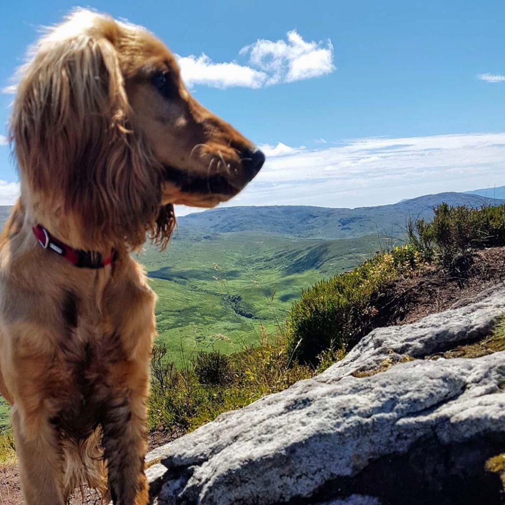 Instagram snaps of cute dogs in scenic places around Ireland include this one of Pippa at Torc Mountain
