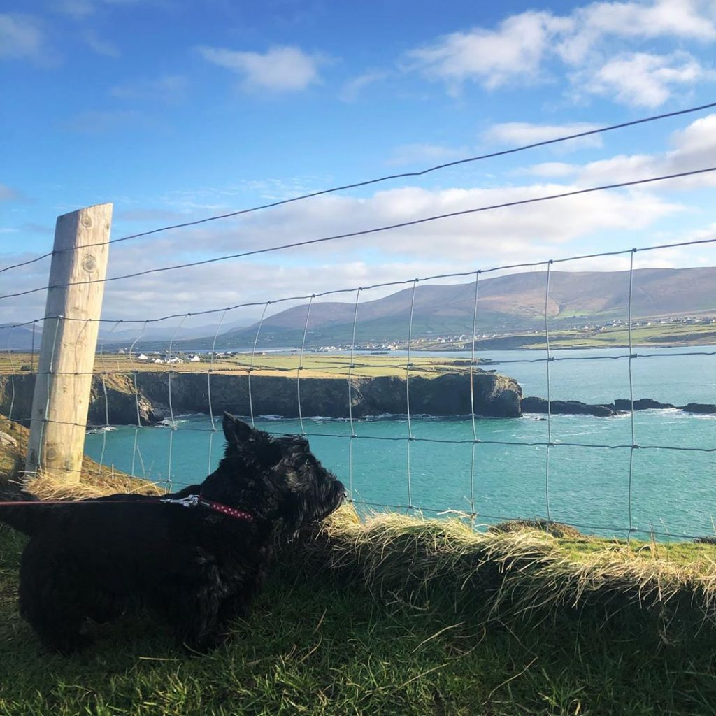 Instagram snaps of cute dogs in scenic places around Ireland include this one of Duncan at Valentia Island