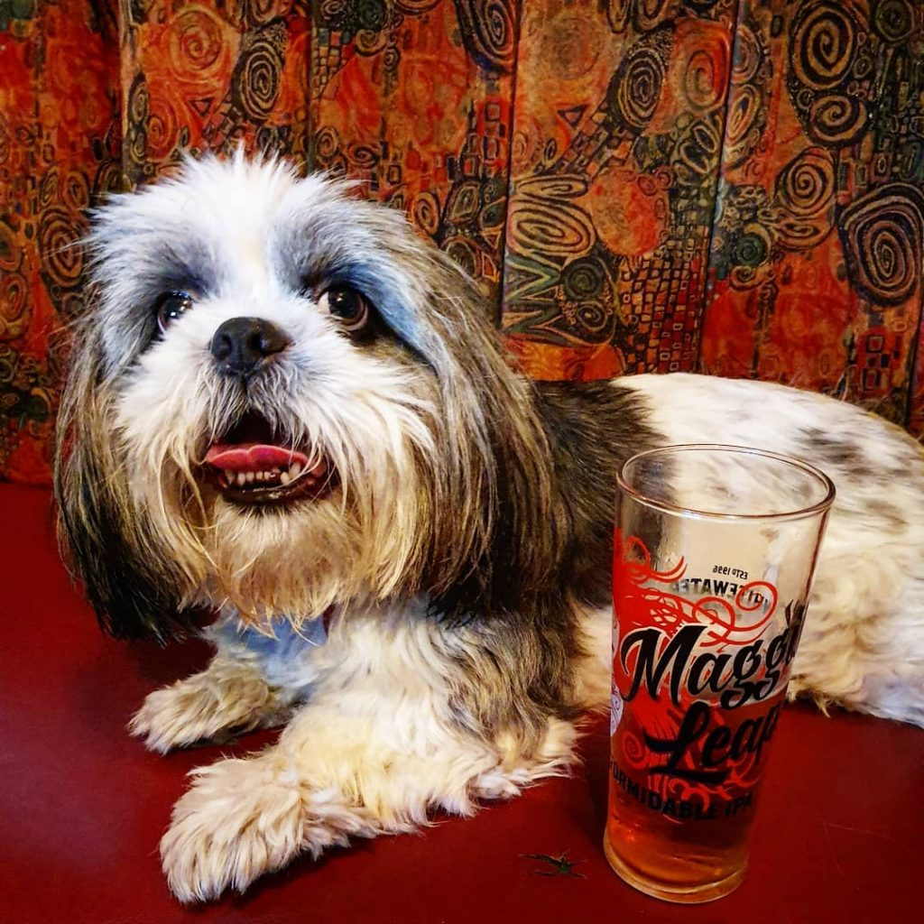 10 dog-friendly bars and pubs in Ireland include Pier 36 in Donagahdee