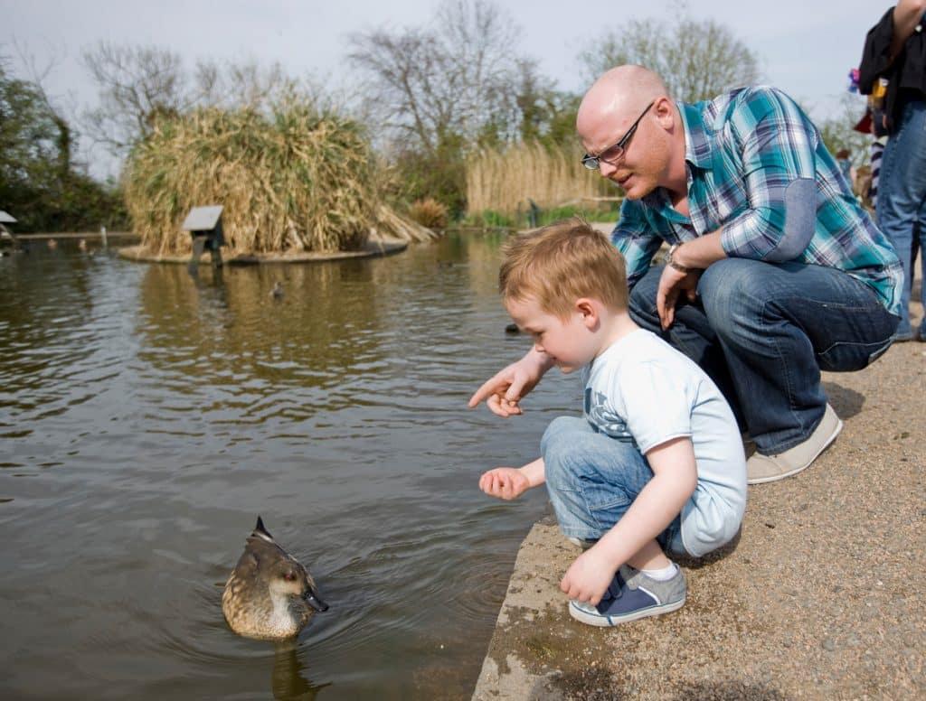 5 amazing places for birdwatching in Ireland Castle Espie Wetland Centre