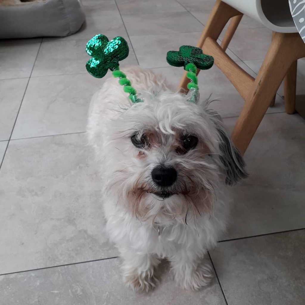 Arthur may not like his deely boppers but we are very big fans.