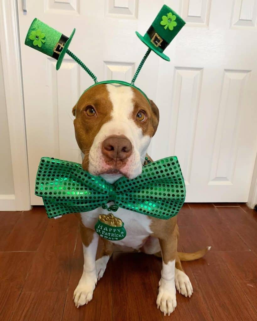 Brody is rocking these stylish deely boppers, a beautiful outfit for a great day.