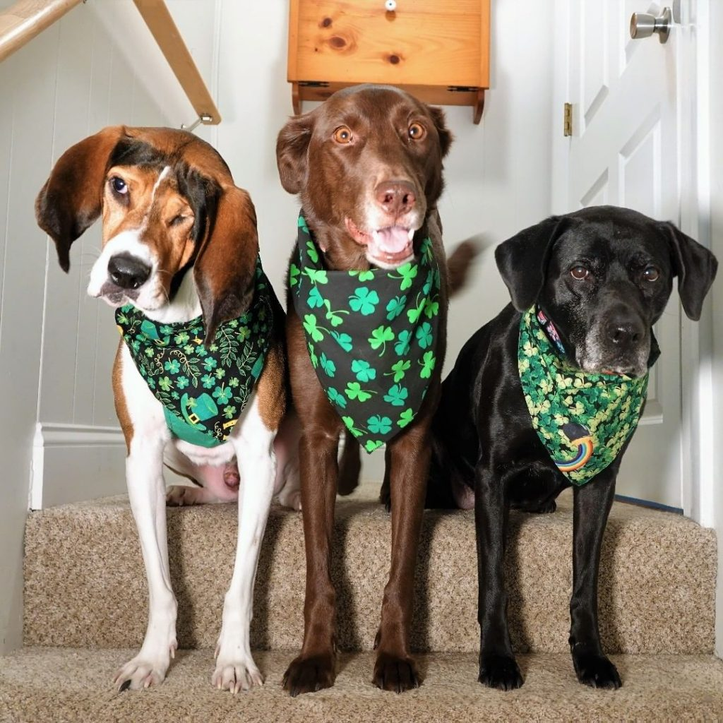 Doc and his friends are adorable as dogs dressed up for St Patrick's Day in their neckties.