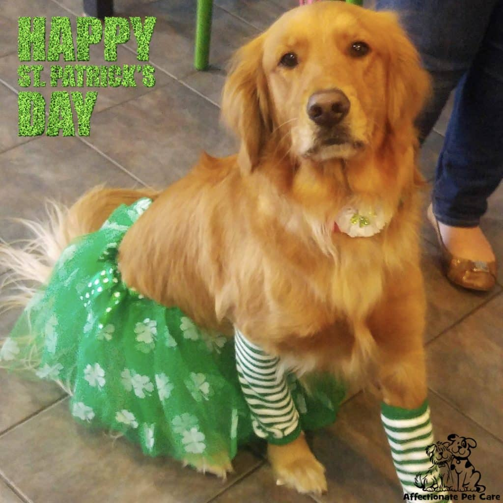 This '80s pup is another of our favourite dogs dressed up for St Patrick's Day.
